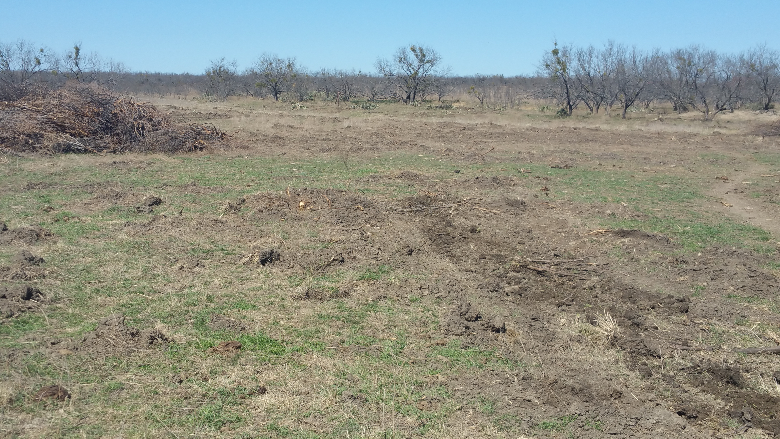 After Image of Brush Removal in West Texas