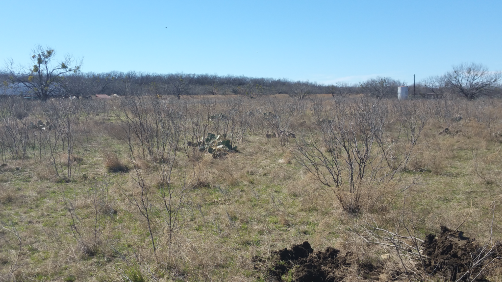 west-tx-brush-removal-before image