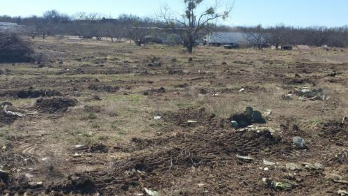 After – Brush Removal from Pastureland