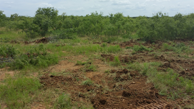 Before – Grubbing Brush for brush removal on pastureland