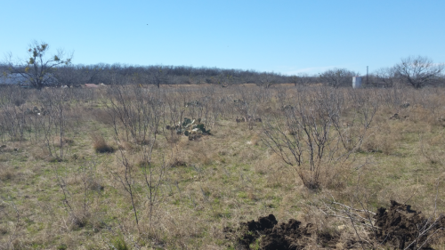 Before – Brush Removal from Pastureland
